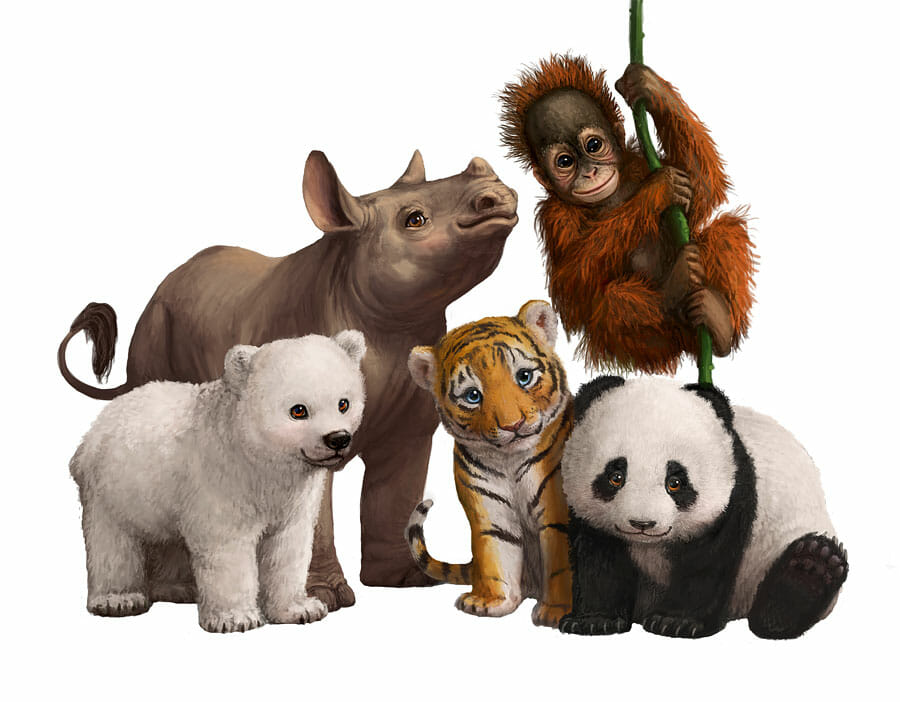 Illustration of the 5 animals for the Wildlife in Need postcard