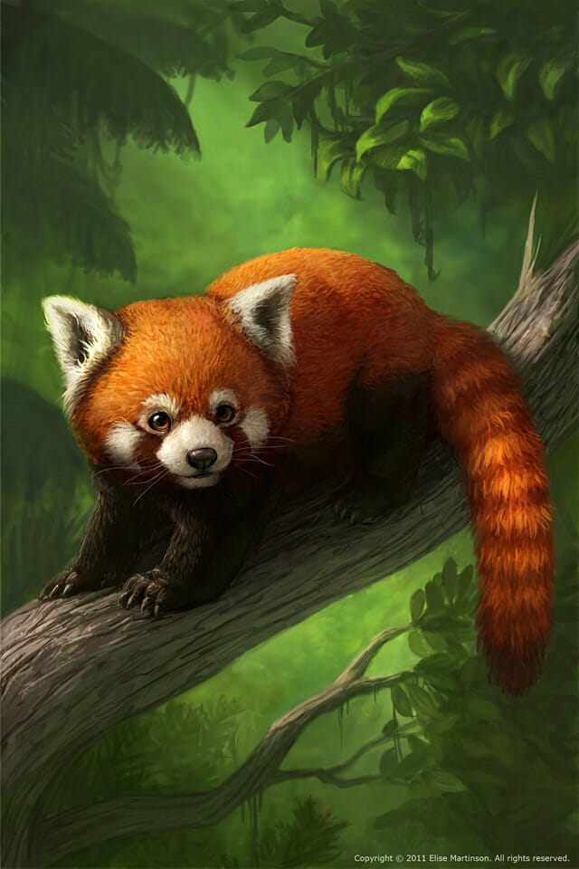 Red Panda IPhone Wallpaper On Behance