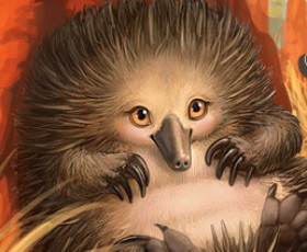 Australian Bush Babies II: Echidna released