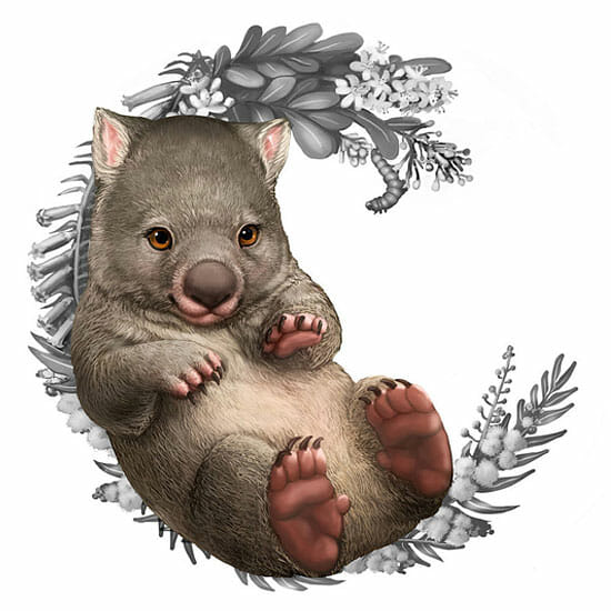Illustration of a wombat for the Bush Babies II coin series