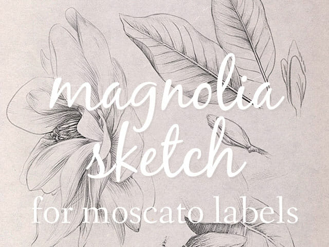 Magnolia sketch for Moscato Labels