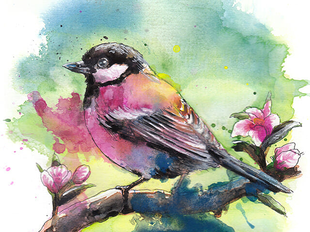 Watercolour bird paintings